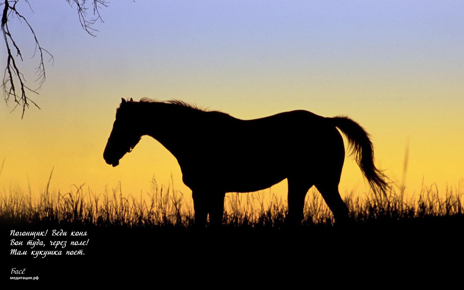 лошади тени ночь  № 359546 без смс