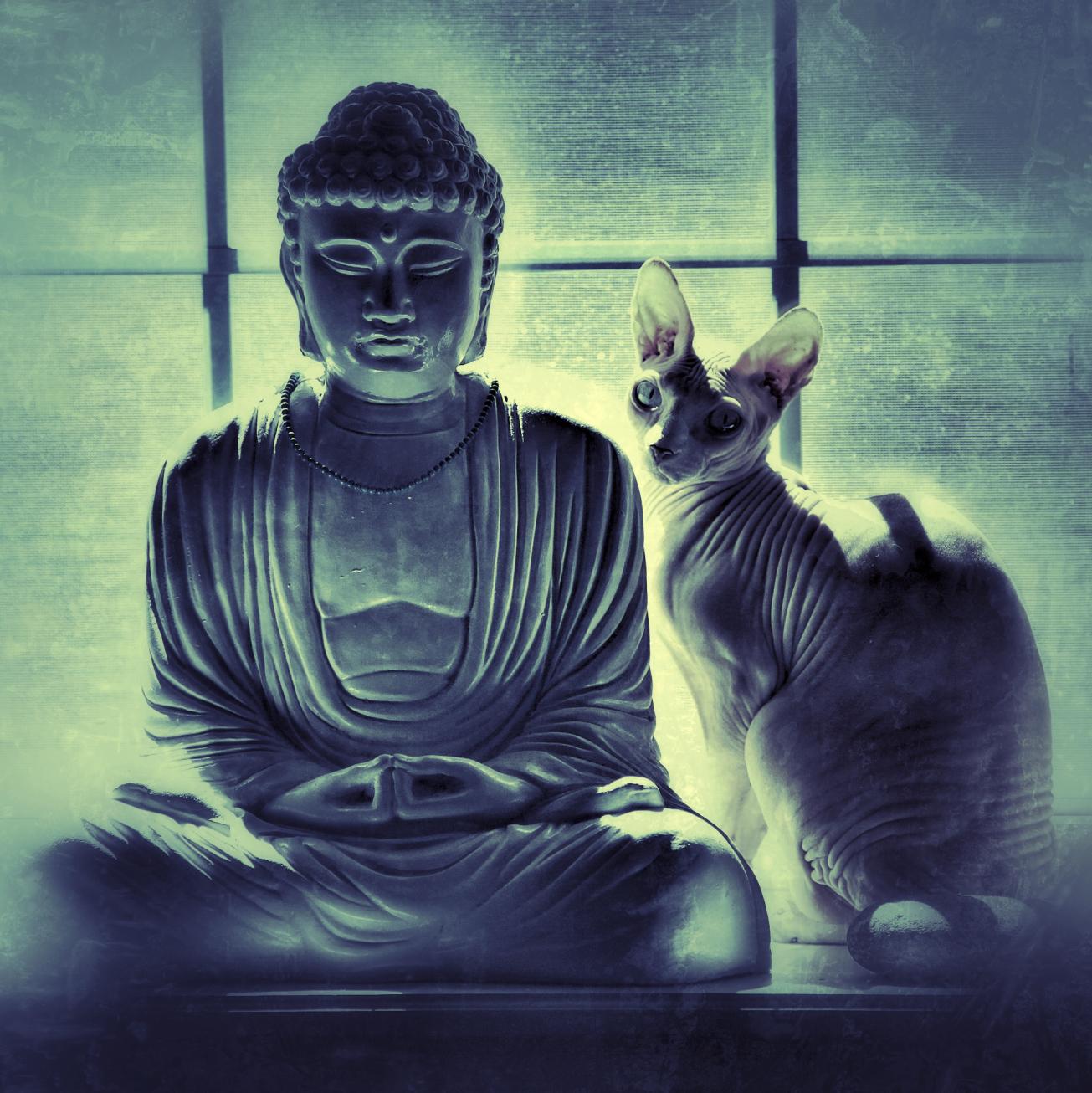 кот буддист картинки должно быть достаточно